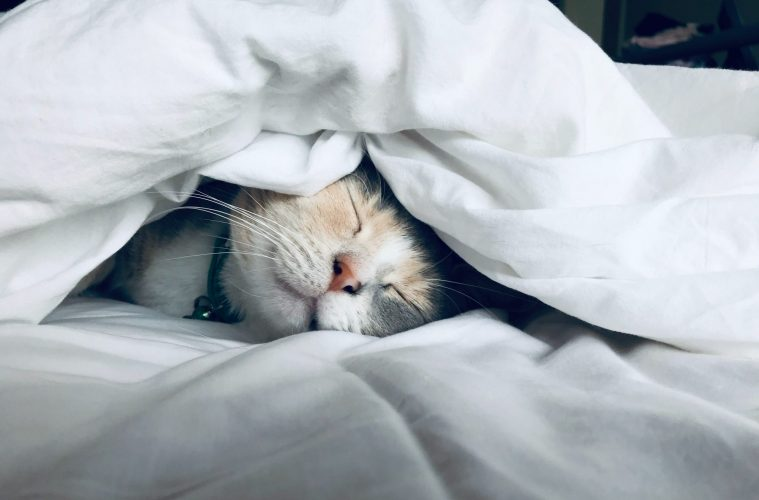 Få bedre søvn og sov godt med disse 11 tips