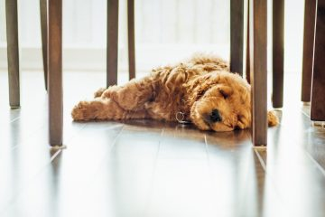 Sove på gulvet